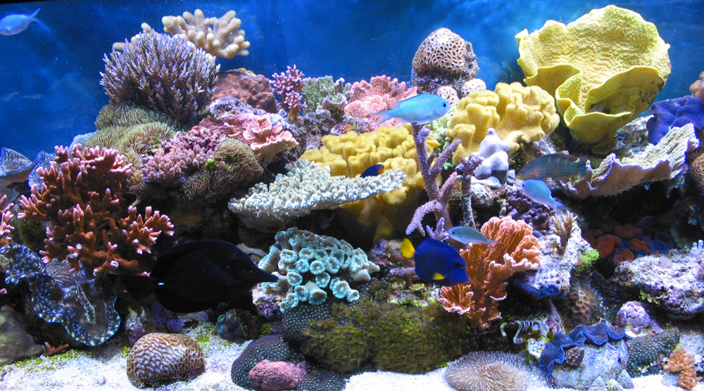 the characteristics of the coral reef habitats Because of the diversity found in the habitats created by corals,  coral characteristics  coral reef ecosystems are severely threatened.